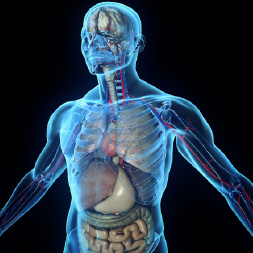 Diploma In Human Anatomy And Physiology